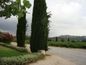 Vineyard: Le Mas de la Dame, at the foot of Les Baux